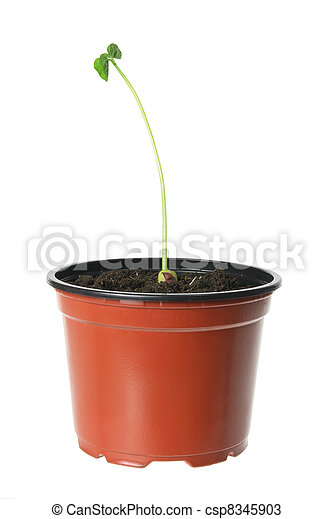 Young Plant - csp8345903