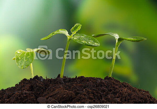 Young plants in earth, concept of new life - csp26809021