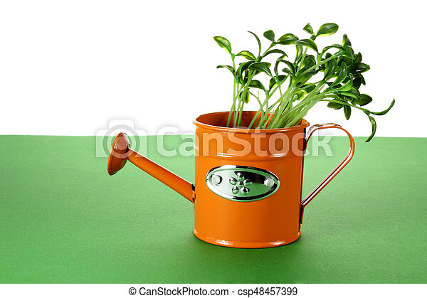 Young Plants in Watering Can - csp48457399