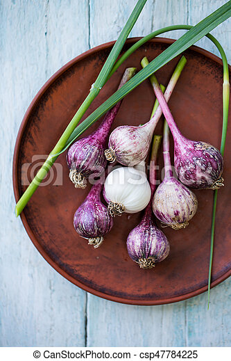 Young purple Garlic in a bowl - csp47784225