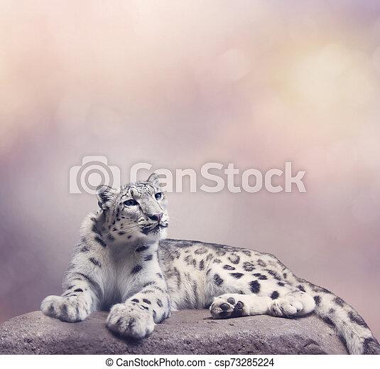 Young Snow leopard portrait - csp73285224