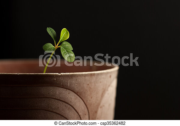 Young sprout on a black background... - csp35362482