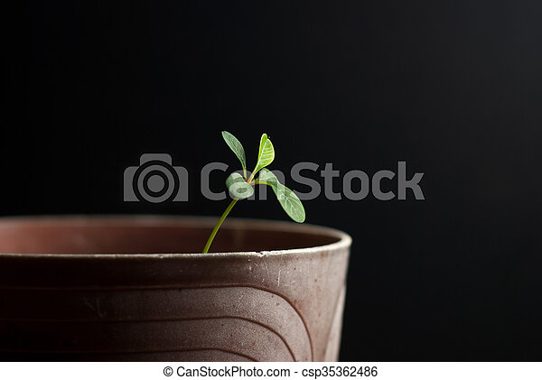 Young sprout on a black background... - csp35362486