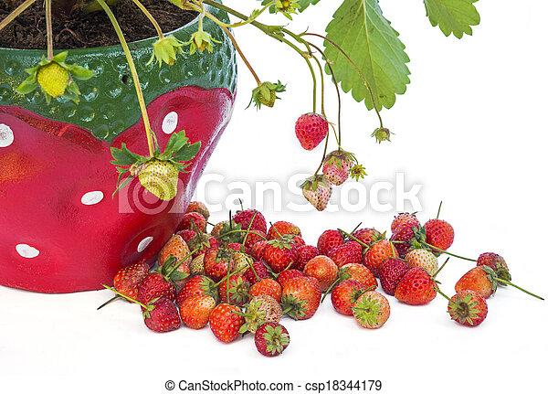 stock photo young strawberry plant in a strawberry pot isolated on white bac