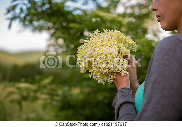 Young woman picking elderflower to make an infusion at home - csp21137617