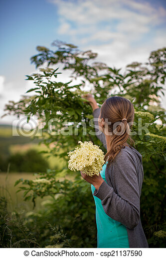 Young woman picking elderflower to make an infusion at home - csp21137590