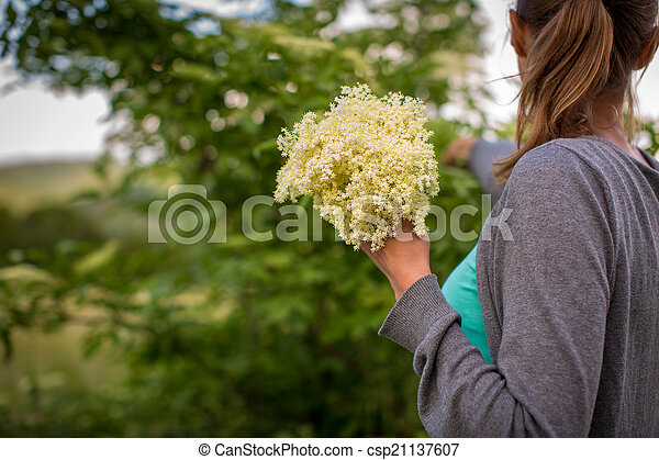 Young woman picking elderflower to make an infusion at home - csp21137607
