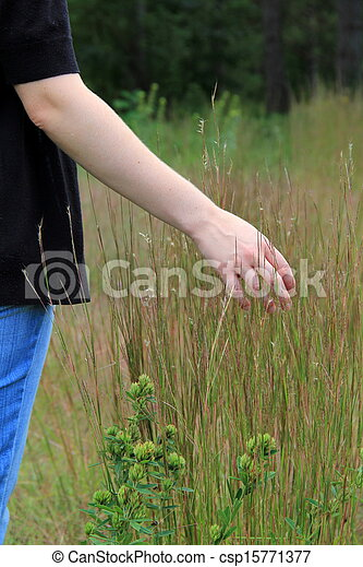 Young woman's hand in tall grass - csp15771377