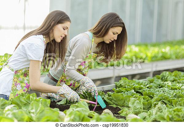 Young women in the garden - csp19951830