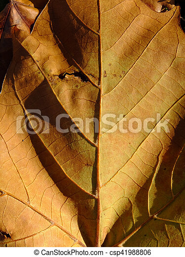 Your Inner Leaf - csp41988806
