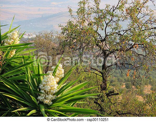 Yucca, blume, baum, mandel. Strauch, farbe, oberseite, tropische ...