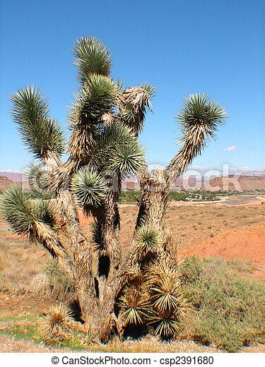 Yucca Plant - csp2391680