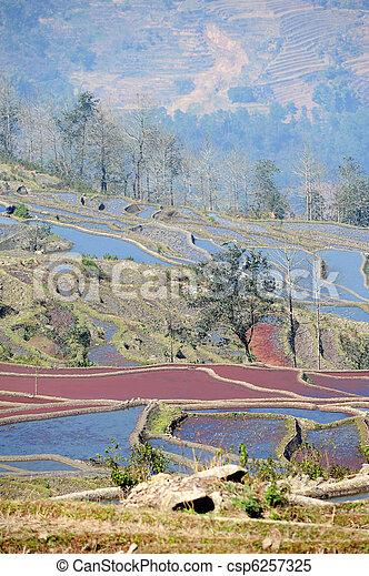 yunnan, terrazzi, porcellana, yuanyang, riso - csp6257325