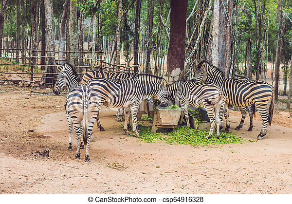 zèbres, parc, vert, safari, herbe, manger - csp64916328