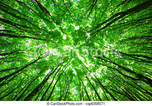 zöld erdő - csp6358571