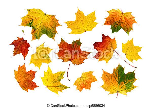 zöld, színes, állhatatos, ősz - csp6886034