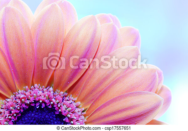 za, szczelnie-do góry, kwiat, światło słoneczne - csp17557651