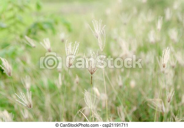 zacht, achtergrond, natuur - csp21191711
