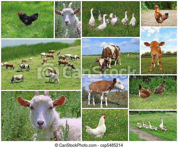 zagroda, collage, ptaszki, zwierzęta - csp5485214