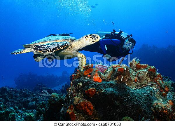 Buzo de buceo y tortuga de halcones - csp8701053