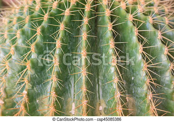 zamknięcie, wizerunek, kaktus, do góry - csp45085386