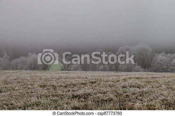 zamrzlý, jíní, les, mlha, balený, pokrytý, bojiště, balíkovat, maličkost - csp87773760