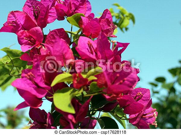 Zanzibar Red Flower Red Flower