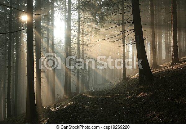 zapfentragend, wald, sonnenaufgang - csp19269220