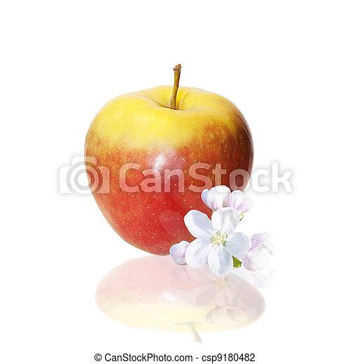 zdrowe jadło - csp9180482