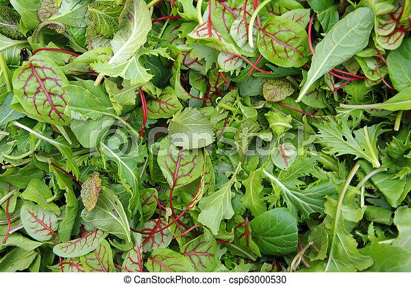 zdrowy, pole, ziele, sałata - csp63000530