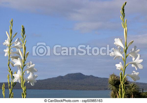 Flores blancas florecen contra la isla de la nueva Zelanda - csp50985163