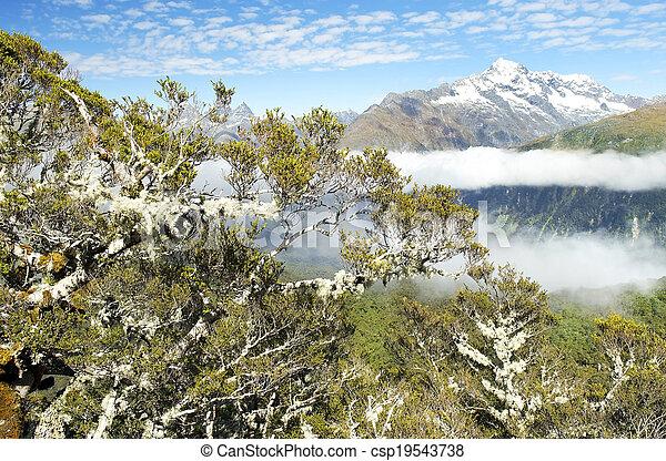 Magníficos paisajes de Nueva Zelanda - csp19543738