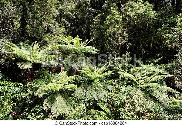 Fiordland, Nueva Zelanda - csp18004284