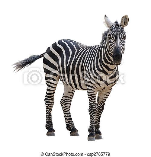zebra - csp2785779