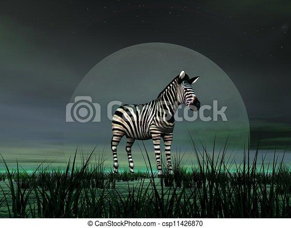 Zebra by moonlight - csp11426870