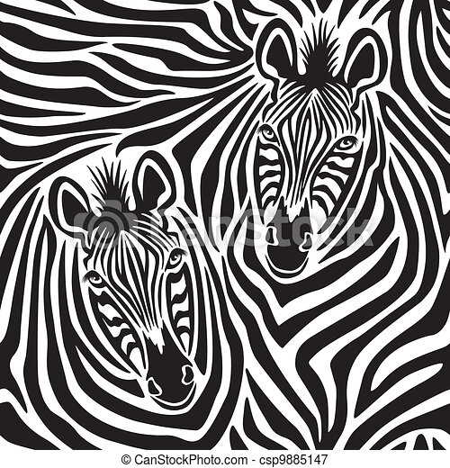 zebra, couple - csp9885147