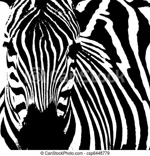 Zebra ( Equus zebra) - csp6448779