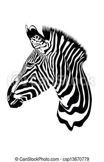 zebra - csp13670779