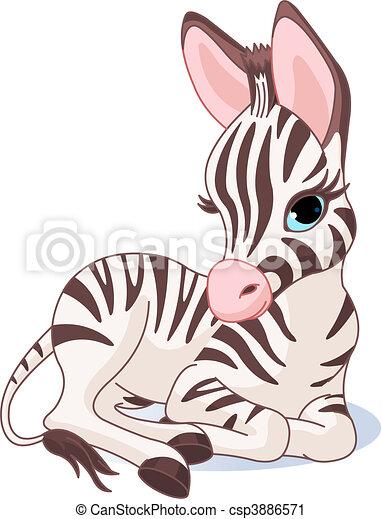 zebra, mignon, poulain - csp3886571