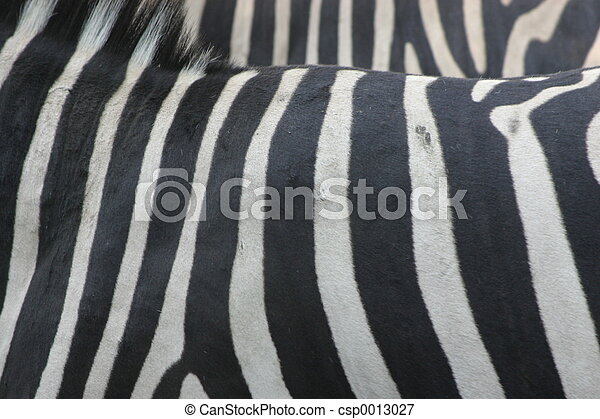 Zebra - csp0013027