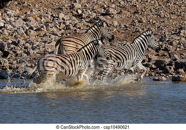 Zebra stampede, Okaukeujo waterhole - csp10490621