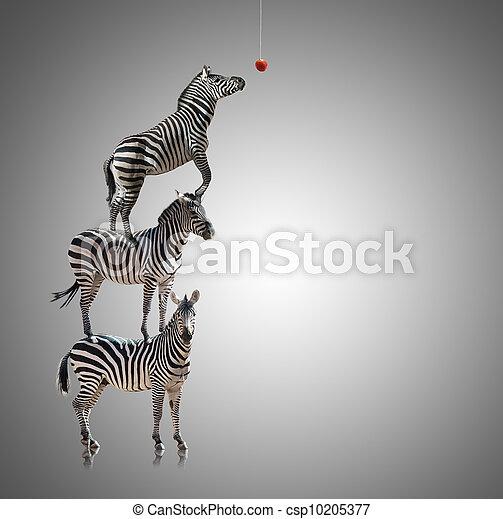 zebra, stapel, appel, eten, reiken - csp10205377
