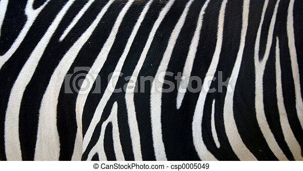 Zebra Stripes - csp0005049