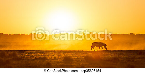 Zebra Sunset Africa At In Botswana With