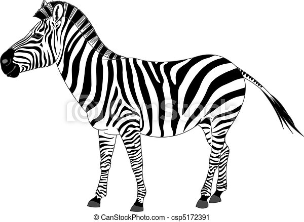 zebra stock illustrations 12 828 zebra clip art images and royalty rh canstockphoto com clipart baby zebra clipart zebra head