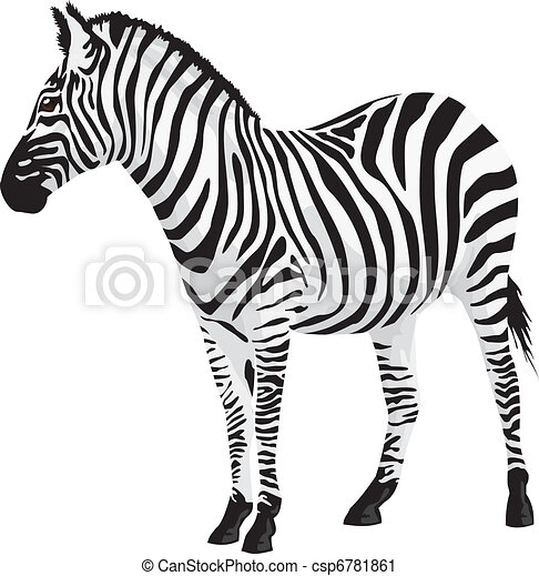 zebra vector illustration vector clip art search illustration rh canstockphoto com vector zebra zebra vector texture