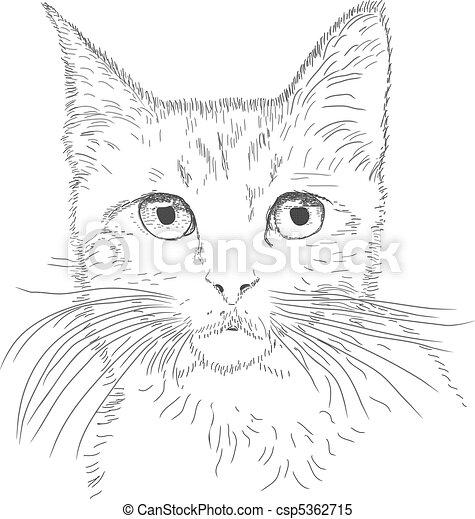 zeichnung, katz - csp5362715