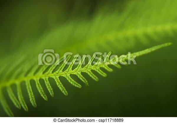 zelândia, novo, fern - csp11718889