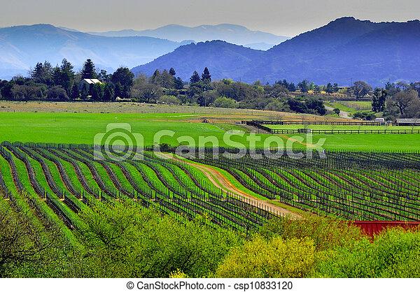 země, dějinný, bujný, víno - csp10833120