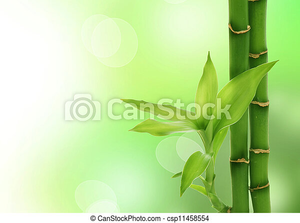 Zen Bamboo - csp11458554